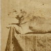 Image: President Lincoln's Dog